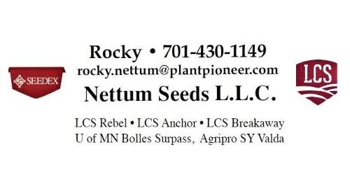 Rocky Nettum Seed 500x280